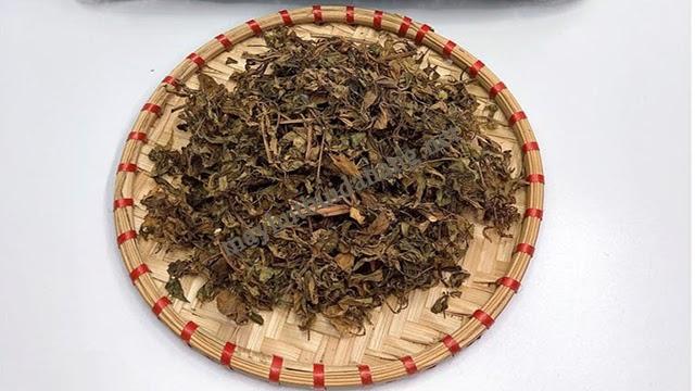 Lá đinh lăng phơi khô có thể sử dụng trong thời gian dài