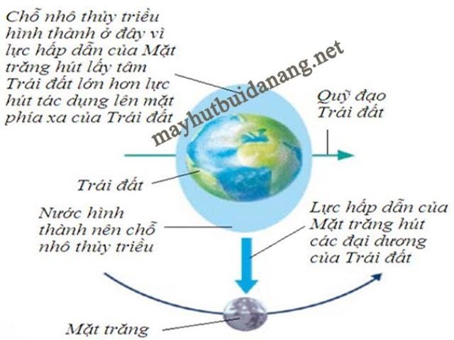 Lực hấp dẫn của Mặt Trăng là nguyên nhân chính hình thành thủy triều
