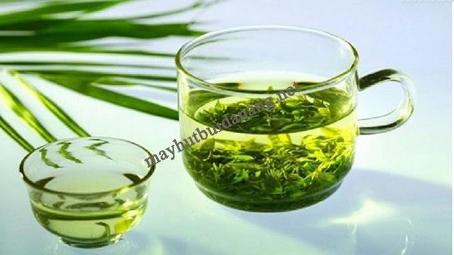 Uống nước lá đinh lăng trong thời gian dài giúp giảm ho