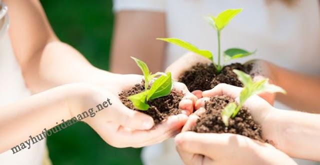 Tổ chức các hoạt động trồng cây xanhnhân ngày Trái Đất