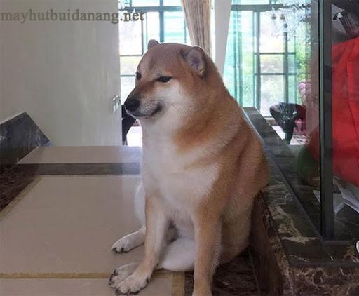 Tấm ảnh gốc của meme Cheems nổi tiếng