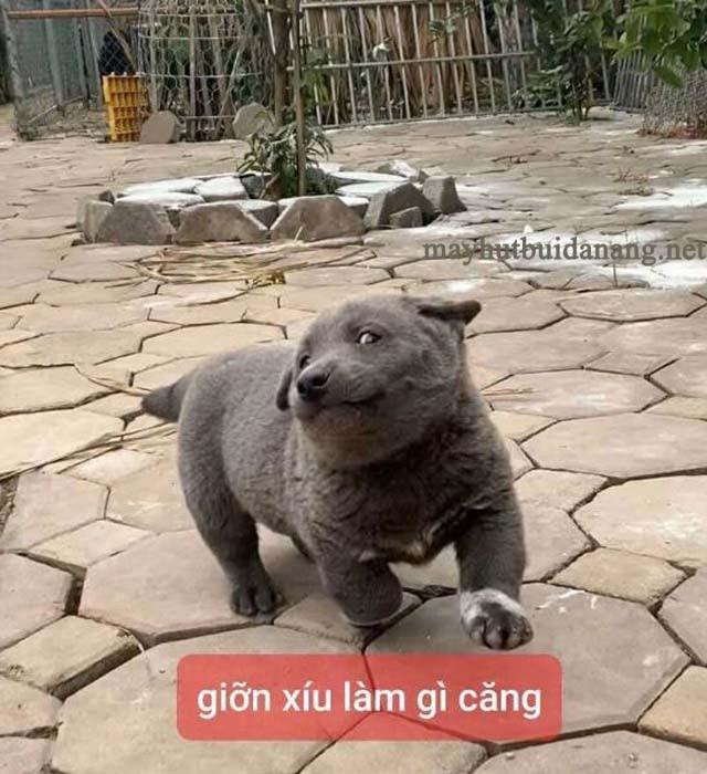 Meme Dúi rất được yêu thích vì sự dễ thương và lém lỉnh
