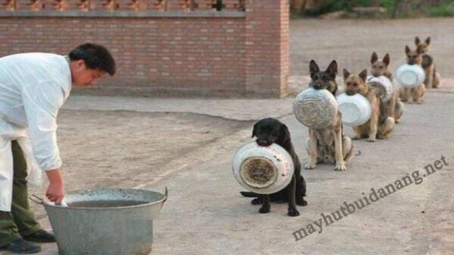 Hình ảnh những chú chó xếp hàng đợi cơm
